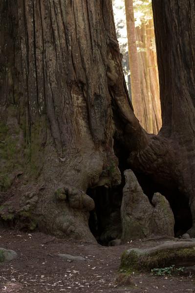 trees-l